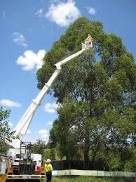 tree_trimer